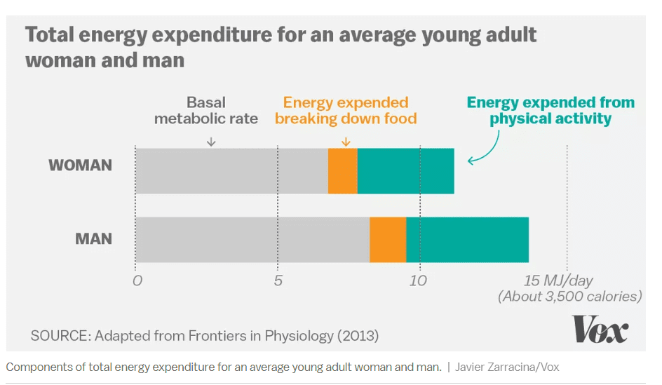Components of total energy expenditure for an average young adult woman and man.