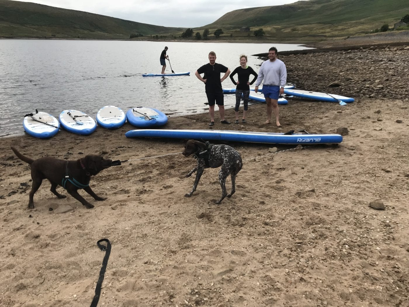 sup iwth dogs friends bluefin west yorkshire bluefin sup